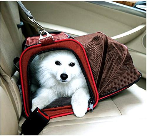 Premium Airline Approved Peppy- Designed Kittens,
