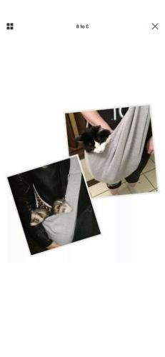 FurryFido Reversible Carrier Dogs up to 13