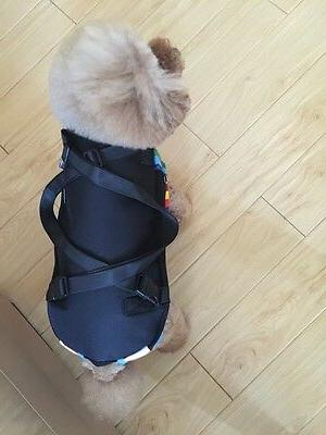 Legs Out Carrier Hands-Free Adjustable Cat Carrier